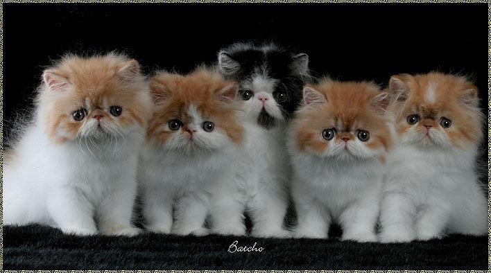 sunnah dan anjuran memeliharan dan merawat kucing