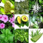10 Tanaman Herbal Untuk Sakit Diabetes Kencing Manis